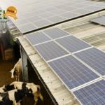 Produtor de leite economiza 80% dos custos com uso de energia solar